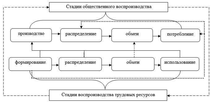 воспроизводства и стадии